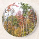 Fall in the Forest Colorful Autumn Photography Drink Coaster