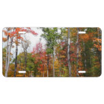 Fall in the Forest Colorful Autumn Photography License Plate
