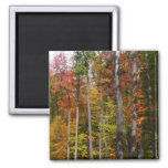 Fall in the Forest Colorful Autumn Photography Magnet