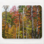 Fall in the Forest Colorful Autumn Photography Mouse Pad