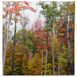 Fall in the Forest Colorful Autumn Photography Napkin