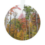 Fall in the Forest Colorful Autumn Photography Ornament