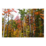 Fall in the Forest Colorful Autumn Photography Photo Print