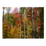 Fall in the Forest Colorful Autumn Photography Postcard