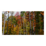 Fall in the Forest Colorful Autumn Photography Poster