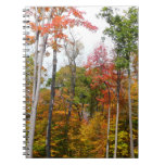 Fall in the Forest Colorful Autumn Photography Spiral Notebook