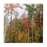 Fall in the Forest Colorful Autumn Photography Tile