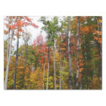 Fall in the Forest Colorful Autumn Photography Tissue Paper