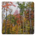 Fall in the Forest Colorful Autumn Photography Trivet