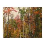 Fall in the Forest Colorful Autumn Photography Wood Print