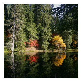 Fall in the Hoh Rainforest Poster