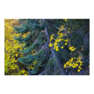 Fall in the Mountains 10 Posters