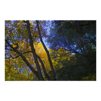 Fall in the Mountains 17 Posters
