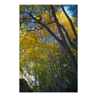 Fall in the Mountains 1 Print