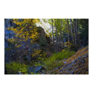 Fall in the Mountains 7 Posters