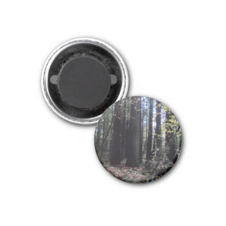 Fall in the Redwoods 1 Inch Round Magnet