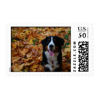 Fall is for the Dogs Postage