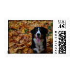 Fall is for the Dogs Postage Stamp