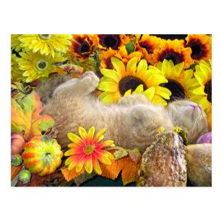 Fall Kitty Cat Kitten Postcard