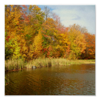 Fall/Lake Design Poster Cattails