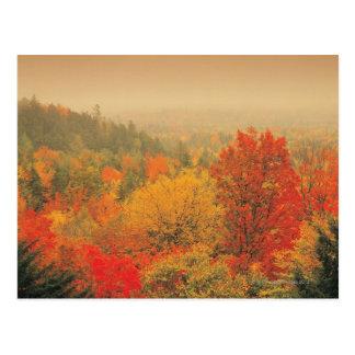 Fall landscape, New Hampshire, USA Postcard
