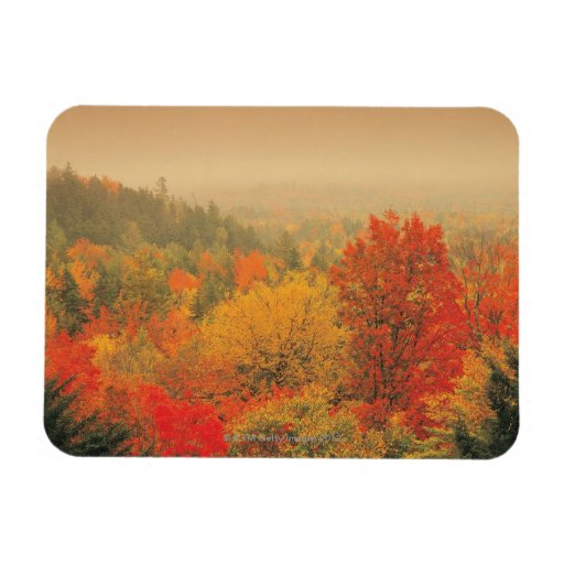 Fall landscape, New Hampshire, USA Rectangle Magnets