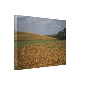 Fall Landscape Photograph Wrapped Canvas Gallery Wrapped Canvas