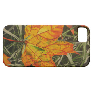 """""""Fall Leaf"""" by Jenny Koch iPhone 5 Covers"""