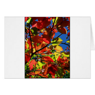 Fall Leaves 2012 Greeting Cards