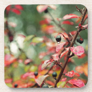 Fall Leaves and Berries in Teal and Red Beverage Coaster