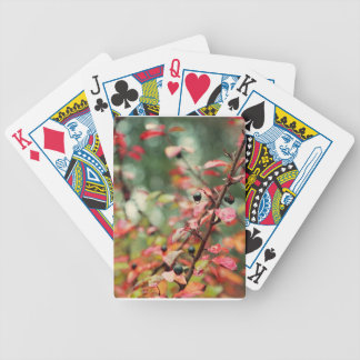 Fall Leaves and Berries in Teal and Red Card Decks