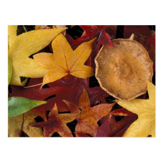Fall leaves and toadstool postcard