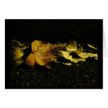 Fall Leaves at Night Card