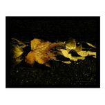 Fall Leaves at Night Postcard