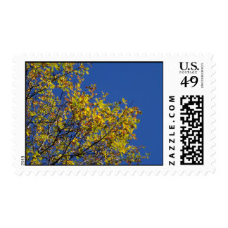 fall leaves blue sky postage stamp