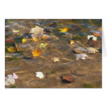 Fall Leaves in Pond Water Nature Photography Card