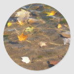 Fall Leaves in Pond Water Nature Photography Classic Round Sticker