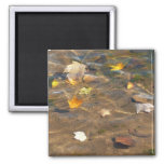Fall Leaves in Pond Water Nature Photography Magnet