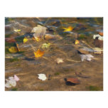 Fall Leaves in Pond Water Nature Photography Poster
