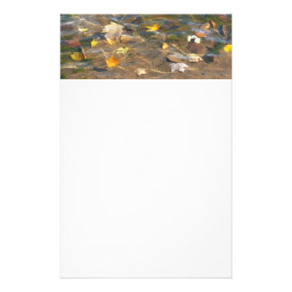 Fall Leaves in Pond Water Nature Photography Stationery