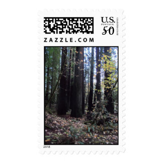 Fall Leaves in the Forest- Humboldt Redwoods Postage