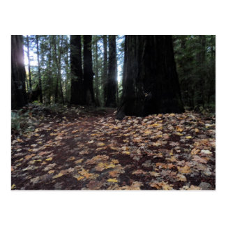 Fall Leaves in the Forest- Humboldt Redwoods Postcard