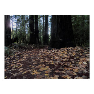 Fall Leaves in the Forest- Humboldt Redwoods Poster