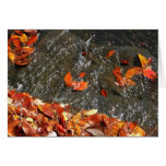 Fall Leaves in Waterfall I Autumn Photography Card