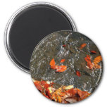 Fall Leaves in Waterfall I Autumn Photography Magnet