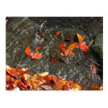 Fall Leaves in Waterfall I Autumn Photography Postcard