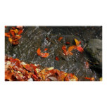 Fall Leaves in Waterfall I Autumn Photography Poster