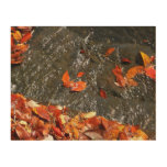 Fall Leaves in Waterfall I Autumn Photography Wood Wall Decor