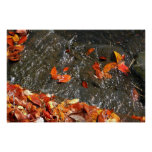 Fall Leaves in Waterfall I Poster