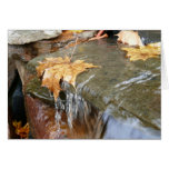 Fall Leaves in Waterfall II Autumn Photography Card